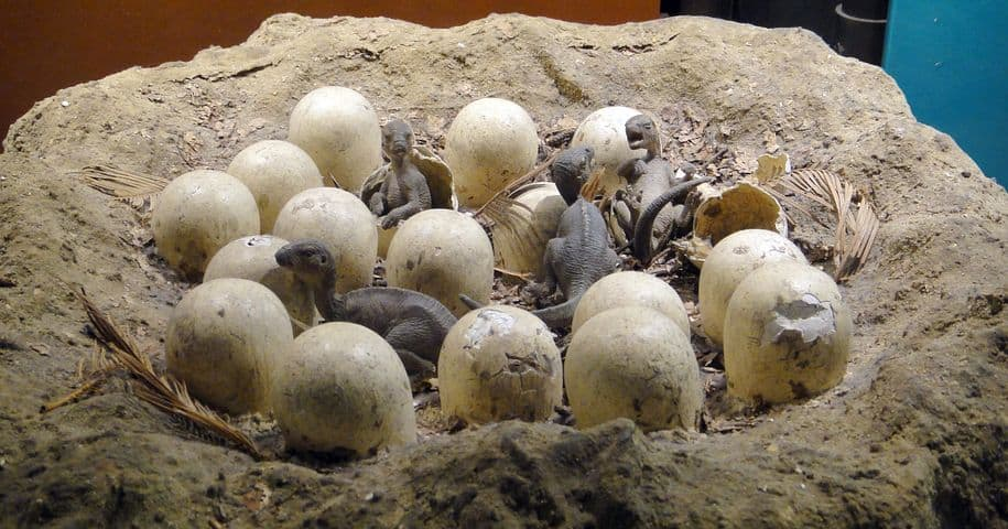 Model of dinosaurs hatching from eggs in a nest