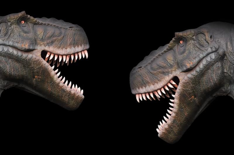 Two T-Rex facing each other with open mouths