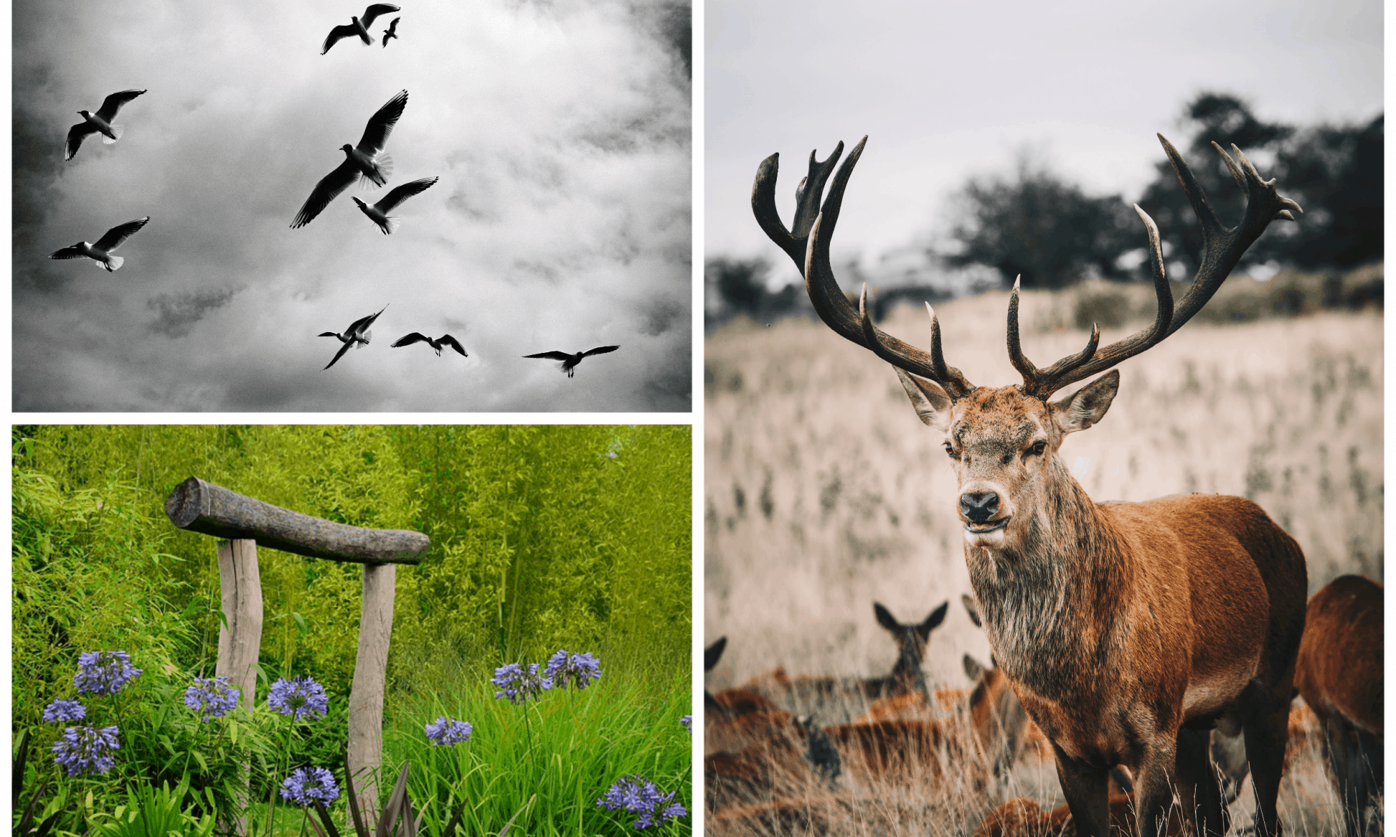 pictures of birds and deer and plants