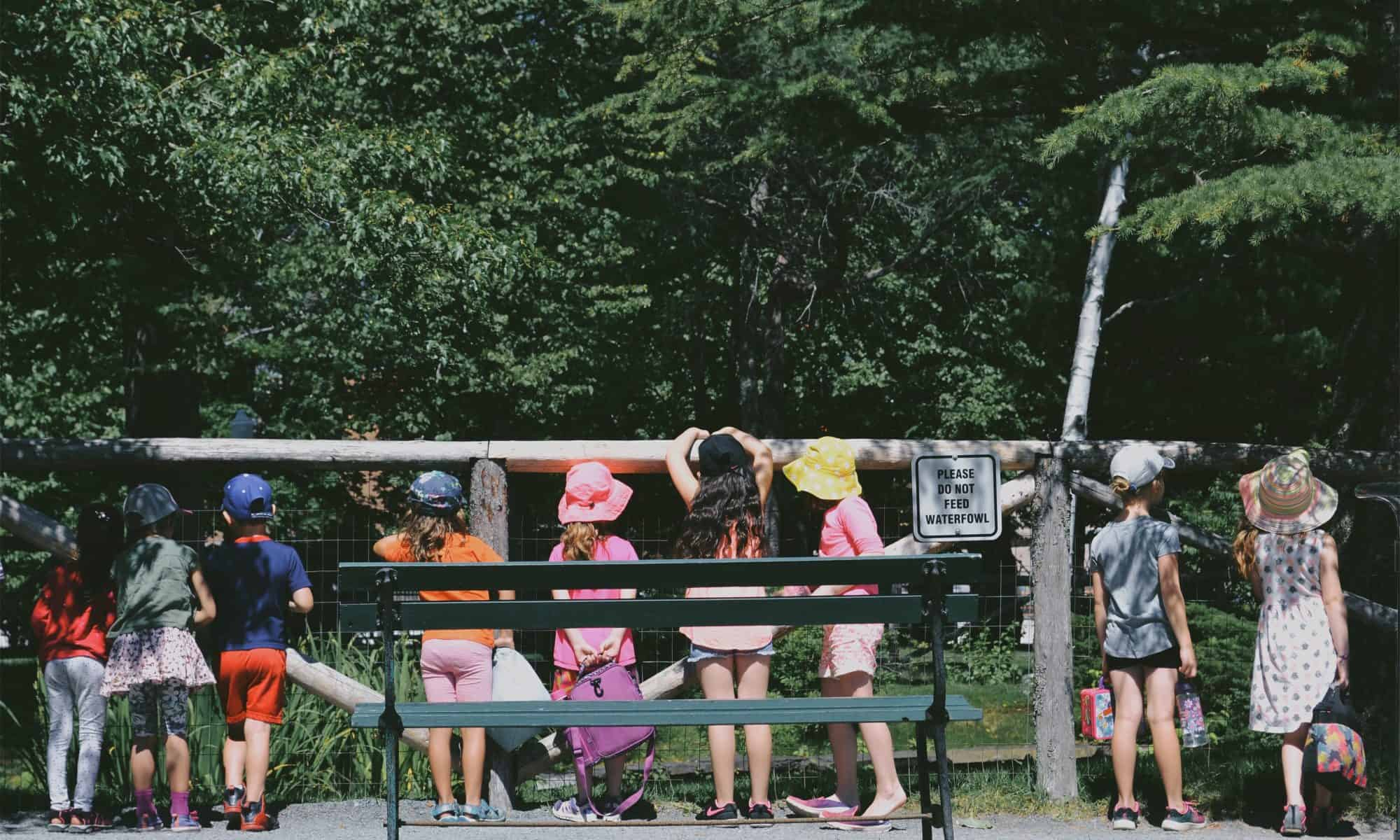 Kids peering over and through an exhibit fence